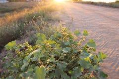 Field. Sunset. Road Stock Photo