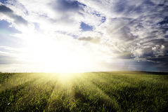Field and sunset sky Stock Photography