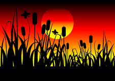 Field and sunset. Vector background Royalty Free Stock Images