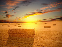 Field at sunset Stock Photo