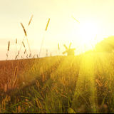 Field on sunset Royalty Free Stock Image