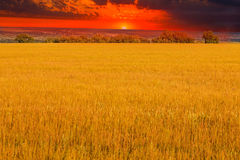 Field sunset yellow landscape agriculture nature royalty free stock photos