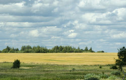 Field. Suzdal district. Field around road Royalty Free Stock Photography