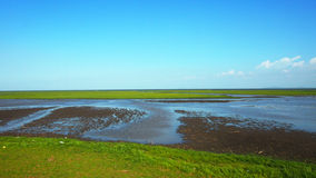 Field swamp Stock Photography
