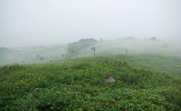 Field täckte med dimma Arkivfoto