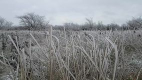 Field with tall grass all covered with crystal ice after the weather phenomenon of icy rain. Autumn weather. Severe weather
