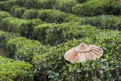 Field of tea plant. Foreground is bamboo farmer hat Royalty Free Stock Photo