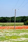 Field with telegraph poles, Lichfield, England. Stock Photos