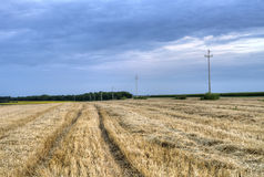 Field with telephone poles in the background Royalty Free Stock Images
