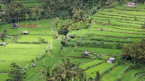Field terraces close to mount Agung, Bali stock video footage