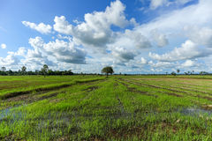 Field thailand. Royalty Free Stock Image