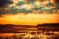 Field after the tide. Rusne region, Lithuania stock image