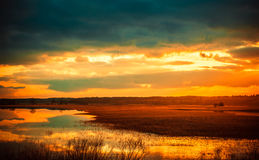 Field after the tide. Rusne region, Lithuania royalty free stock photos