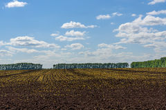 Field tillage agriculture sky. Beautiful rural landscape with plowed brown field and green trees on the edge of the field on a background of blue sky and clouds Stock Photo