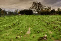 Field of Tillage in Lugo stock image