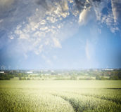 Field with tractor tracks and beautiful sky , blurred nature background Royalty Free Stock Images
