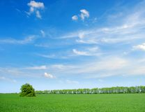 Field with tree Stock Photos