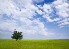 Field and tree Royalty Free Stock Photography