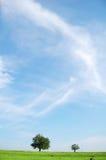 Field, tree and blue sky Royalty Free Stock Photo