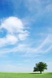 Field, tree and blue sky Royalty Free Stock Photos