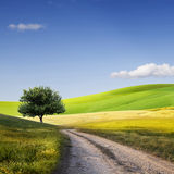 Field,tree and blue sky Royalty Free Stock Images
