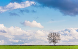 Field, tree and blue sky Stock Photos