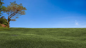 Field,tree and blue sky Stock Images
