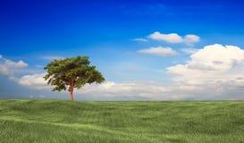 Field,tree and blue sky Stock Photo