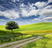 Field,tree and blue sky Royalty Free Stock Image