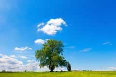 Field Tree and Blue Sky Stock Photography
