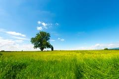 Field Tree and Blue Sky Stock Photo