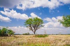 Field,tree and blue sky Stock Photos