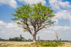Field,tree and blue sky Royalty Free Stock Photos