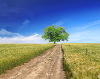 Field,tree, blue sky with way Royalty Free Stock Photo
