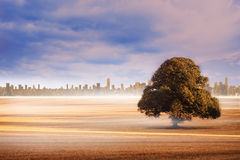 Field with tree and city on the horizon Stock Image