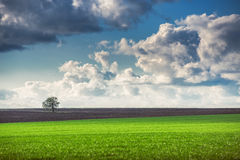 Field,tree and cloudy sky Royalty Free Stock Images