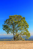 Field,tree,concrete  and blue sky Royalty Free Stock Images