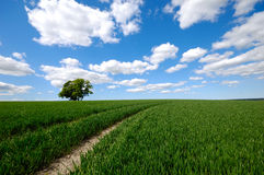 Field with tree on hill Stock Images