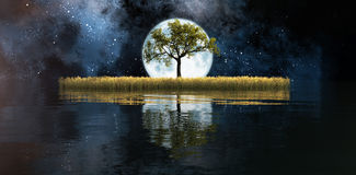 Field with a tree. Illustration of the moon and a wheat field with a tree Stock Image