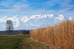 Field with Tree and Mountains with Snow stock photography