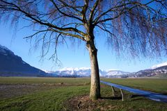 Field with Tree and Mountains with Snow stock images