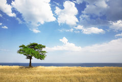 Field, tree, sea Stock Images