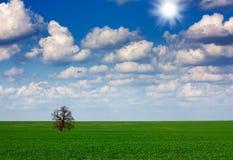 Field,tree and sky Stock Photography