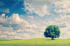 Field and tree. Vintage retro hipster style version Stock Photos