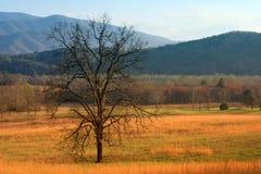 field treen Royaltyfri Bild