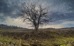field treen arkivfoto