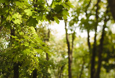 field treen Royaltyfri Fotografi