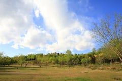 field treen Royaltyfria Foton