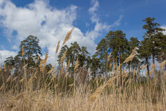 field treen royaltyfri foto