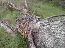 field treen royaltyfria bilder